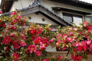 fleurs et tradition, Matsue