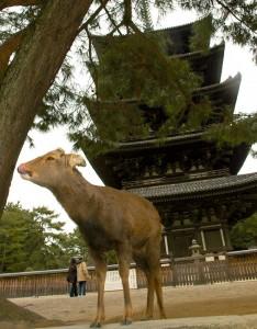 la pagode et le daim