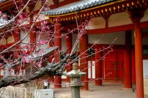 début de floraison, Todai-ji, Nara