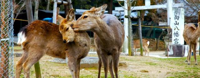 Nous sommes samedi 12 mars, et Astrid est en week-end. Nous allons ensemble visiter la ville de Nara, ancienne capitale du Japon (au VIIIe siècle) à 30km à l'est d'Osaka. […]