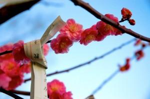 prunier a voeux, Hokoku-jinja, Osaka